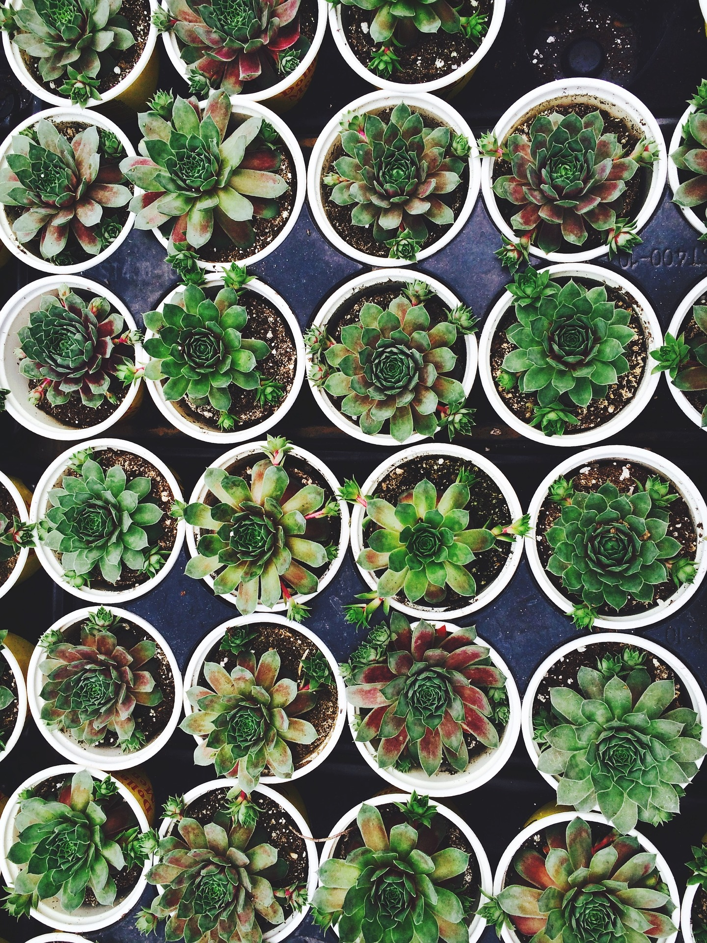 RHS (Level 2) Certificate In Horticulture VHT003 - Online ...